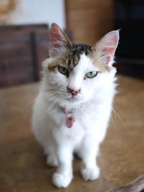 猫のお留守番 ハナちゃんホビちゃんエムくんライオンちゃん編。_a0143140_18573956.jpg