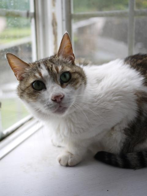 猫のお留守番 ハナちゃんホビちゃんエムくんライオンちゃん編。_a0143140_1914388.jpg