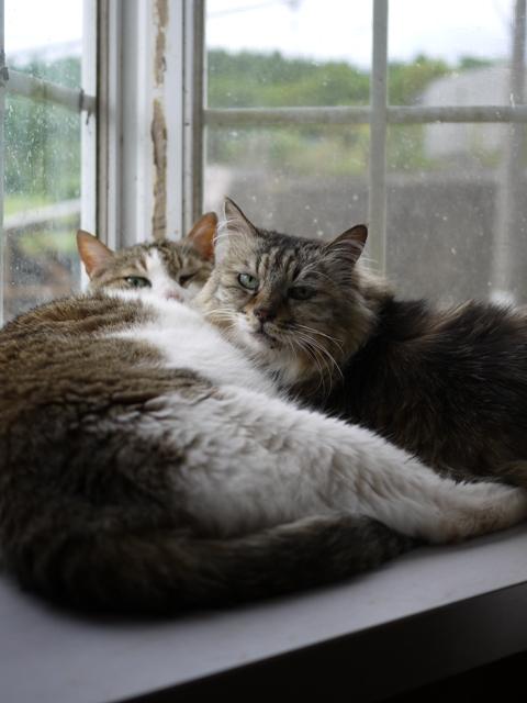 猫のお留守番 エムくんライオンちゃんダイヤちゃんクラブちゃんフーちゃん編。_a0143140_19151698.jpg