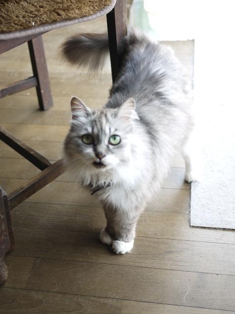 猫のお留守番 エムくんライオンちゃんダイヤちゃんクラブちゃんフーちゃん編。_a0143140_19162437.jpg