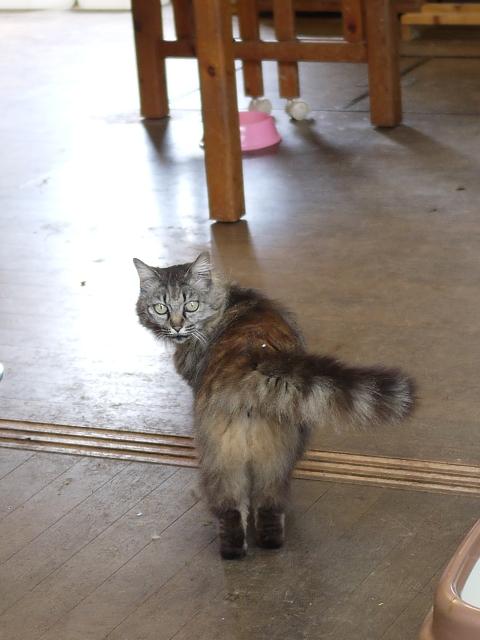 猫のお留守番 エムくんライオンちゃんダイヤちゃんクラブちゃんフーちゃん編。_a0143140_19191768.jpg
