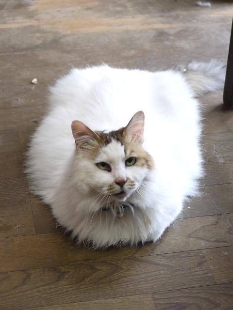 猫のお留守番 エムくんライオンちゃんダイヤちゃんクラブちゃんフーちゃん編。_a0143140_19202323.jpg