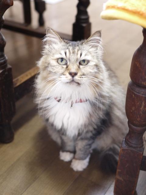 猫のお留守番 ハナちゃんホビちゃんエムくんライオンちゃん編。_a0143140_1921336.jpg