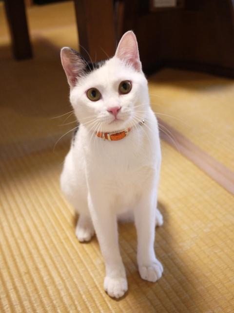 猫のお留守番 たらくん編。_a0143140_19242126.jpg