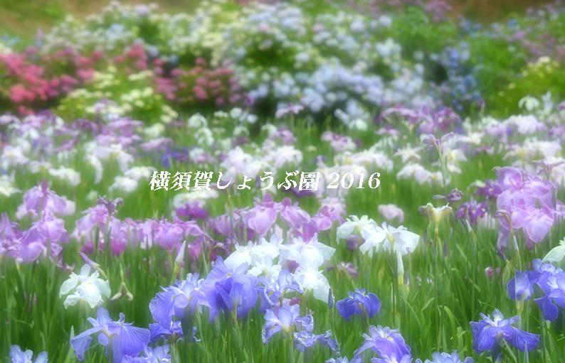 d0251161_12484485.jpg