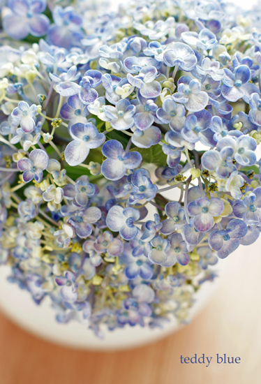 mother\'s blue hydrangea  母のブルーの紫陽花_e0253364_22544247.jpg