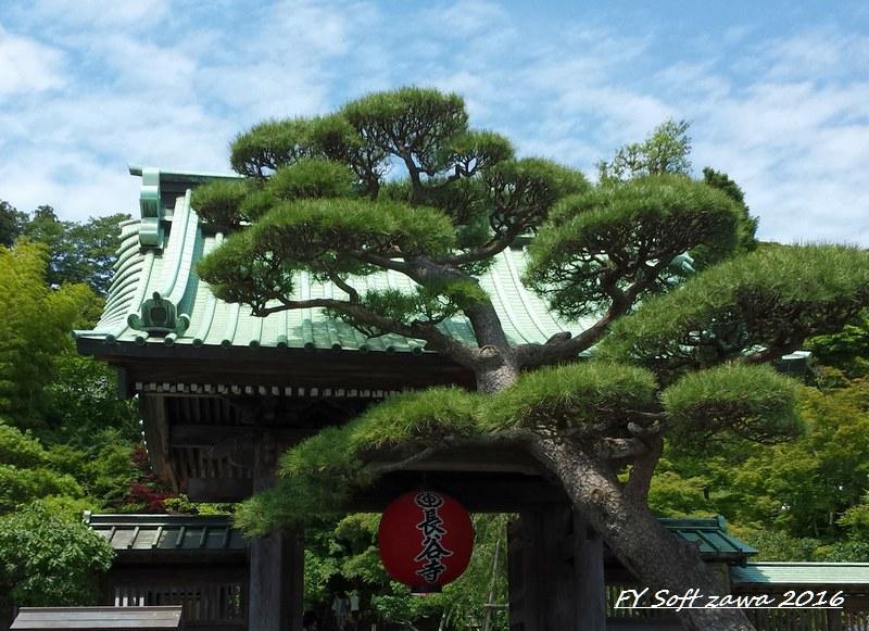 ◆ アジサイ咲く鎌倉へ、その1 「長谷寺」へ (2016年6月)_d0316868_1225395.jpg