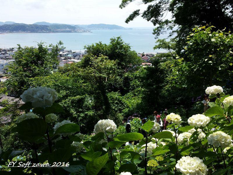 ◆ アジサイ咲く鎌倉へ、その1 「長谷寺」へ (2016年6月)_d0316868_1254599.jpg