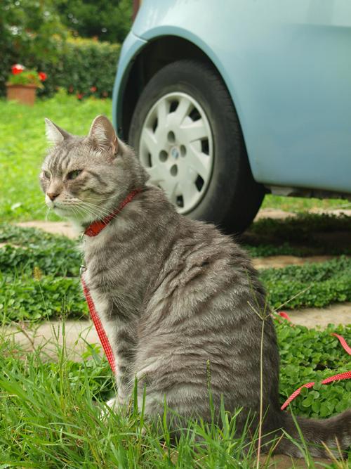イタリアの獣医さんからの猫ご飯レシピーーイタ猫FUJI大好きご飯_c0179785_184117.jpg