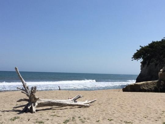 海辺のお散歩、イネイト健康教室、海を眺めながらのランチ会のお知らせ_e0251887_17042897.jpeg