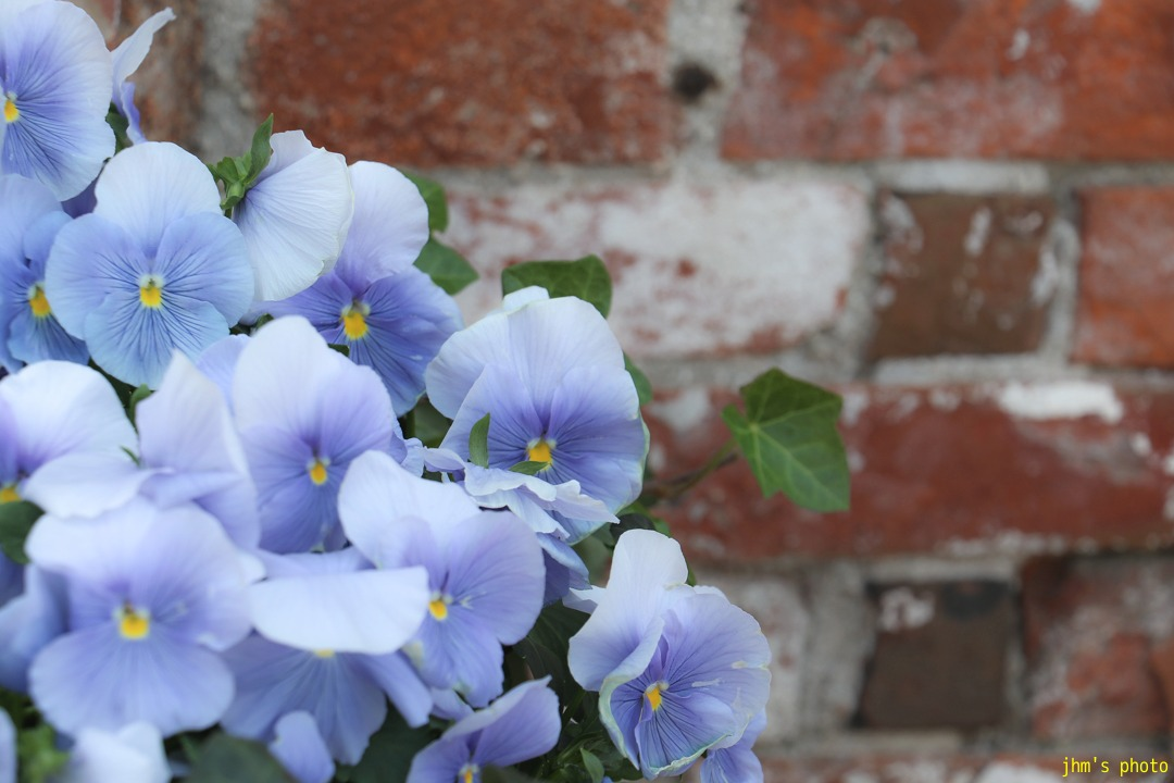 花の写真と写真そのもの_a0158797_23333789.jpg