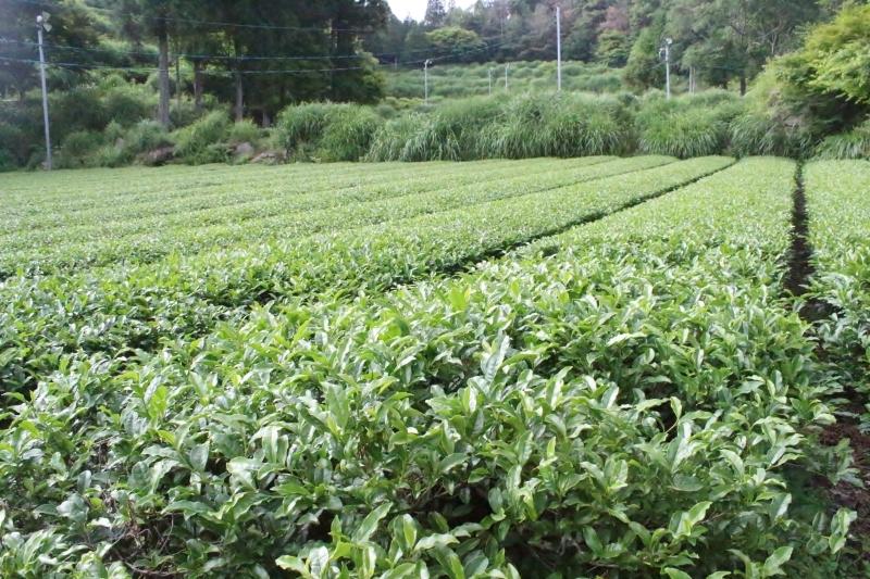 茶LON (33)、そして畑_b0220318_08393564.jpg