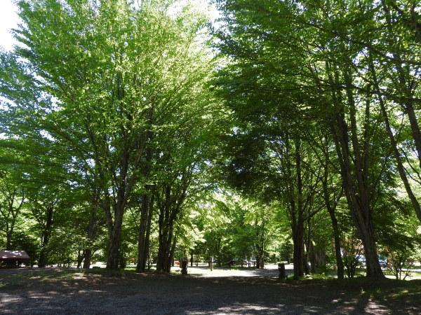 木漏れ日が気持ちいい季節になりました_b0174425_12154220.jpg