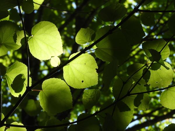 木漏れ日が気持ちいい季節になりました_b0174425_12162637.jpg