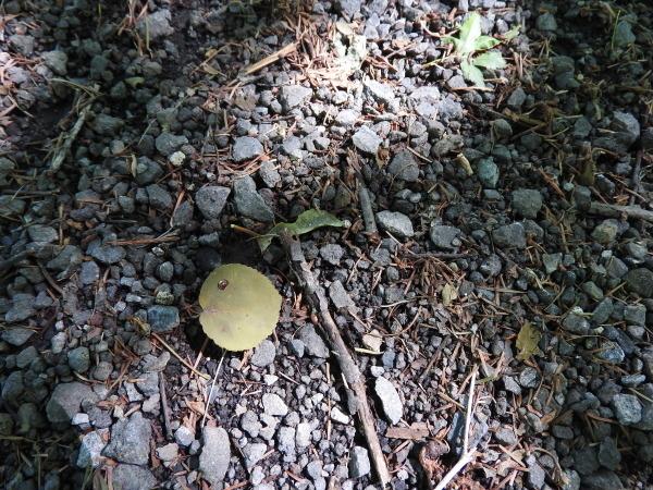 木漏れ日が気持ちいい季節になりました_b0174425_12195304.jpg