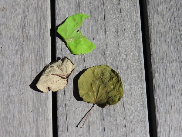 木漏れ日が気持ちいい季節になりました_b0174425_12231140.jpg