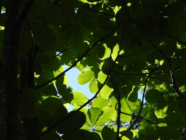 木漏れ日が気持ちいい季節になりました_b0174425_12245767.jpg