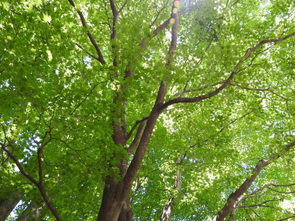 木漏れ日が気持ちいい季節になりました_b0174425_12251573.jpg
