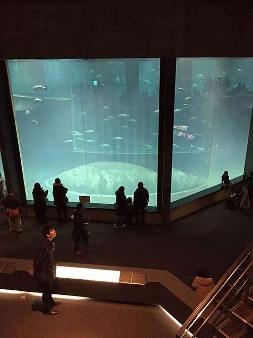 「葛西臨海水族園」を設計した建築家_f0170331_1822512.jpg