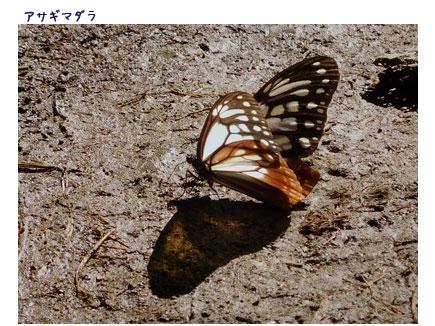 高尾山へ_c0051105_042673.jpg