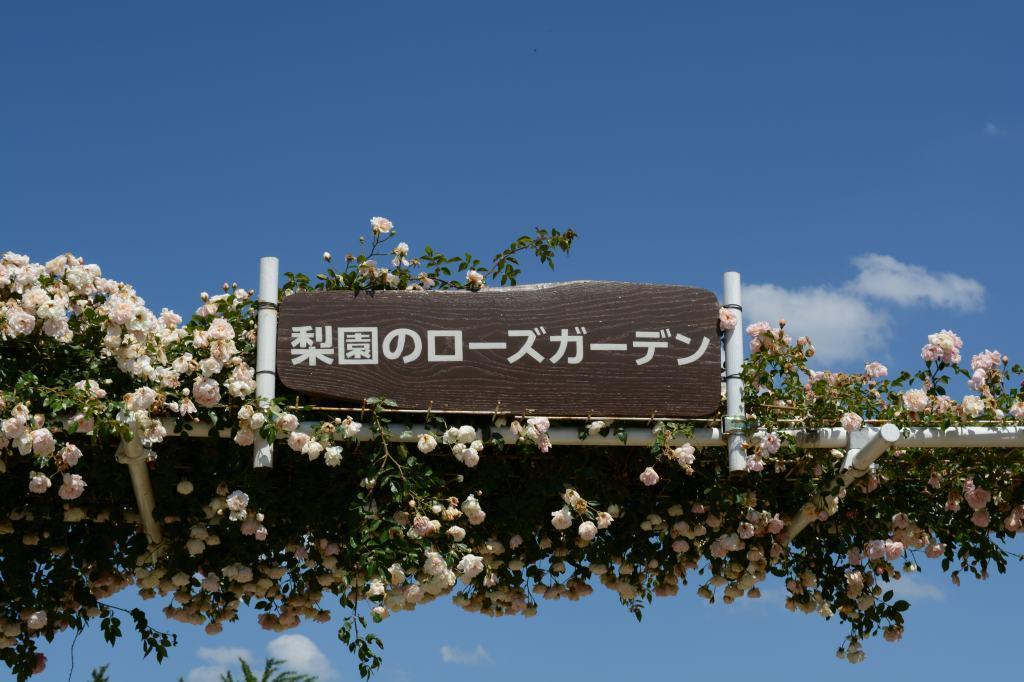 福島市「佐藤梨園のローズガーデン」を堪能_a0148206_06552985.jpg