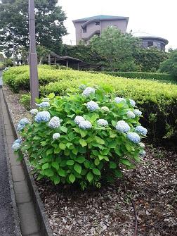 花の森行脚_c0034228_22445231.jpg