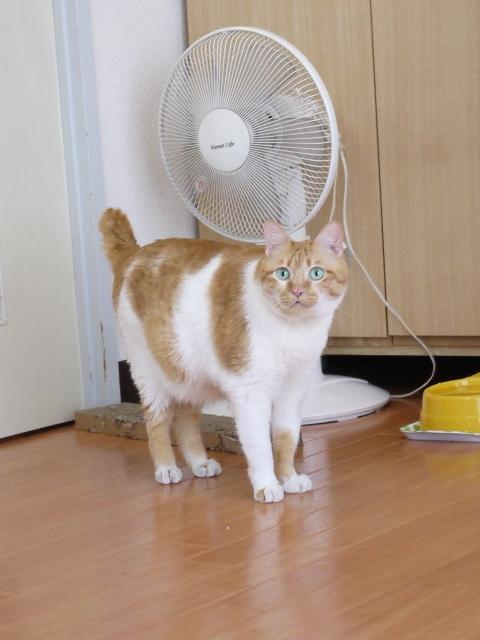 猫のお留守番 喜助くん諭吉くん編。_a0143140_2051276.jpg