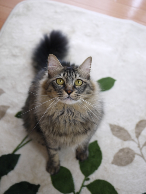 猫のお留守番 喜助くん諭吉くん編。_a0143140_2054168.jpg