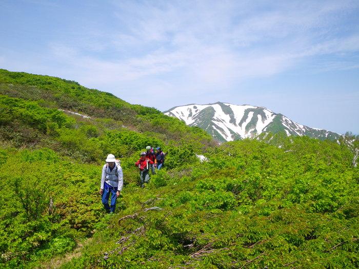飯豊・西俣尾根から稜線へ ~ 2016年6月4日_f0170180_550254.jpg