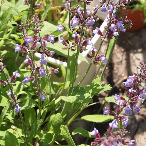 お庭の花 続き_a0292194_1746301.jpg