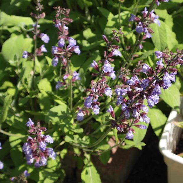 お庭の花 続き_a0292194_1759810.jpg