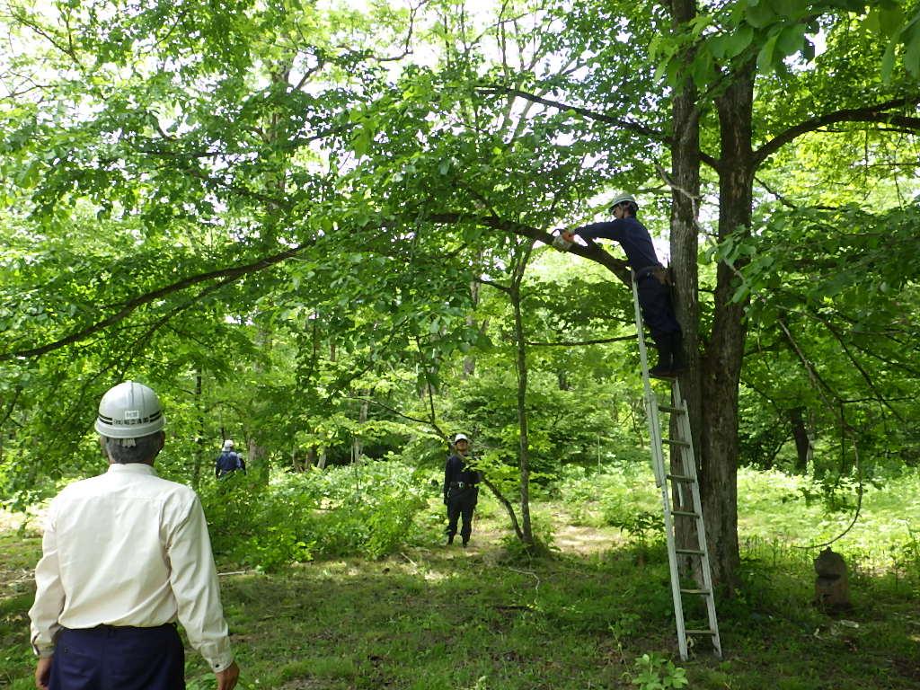 アファンの森作業報告(センター草刈)_b0172896_196314.jpg