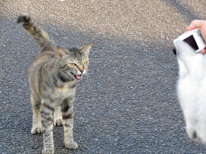朝の空、朝のカラスに朝のネコ、そしてもちろん朝の犬^m^_c0049299_23201217.jpg