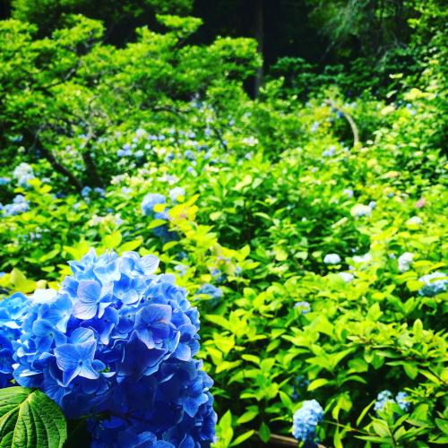 鎌倉旅行記。_d0336521_18533200.jpg