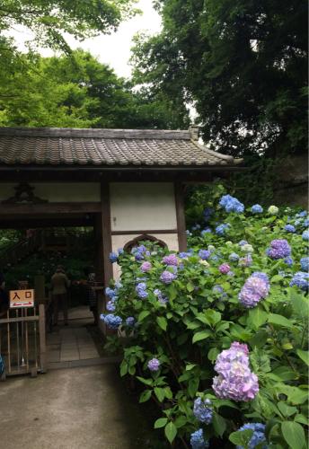 鎌倉旅行記。_d0336521_18533276.jpg