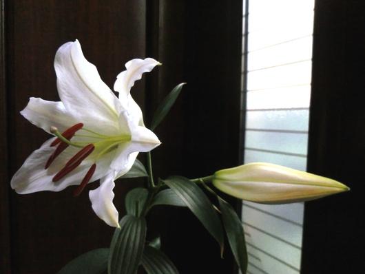 百合の花ひらく_e0253932_7463186.jpg