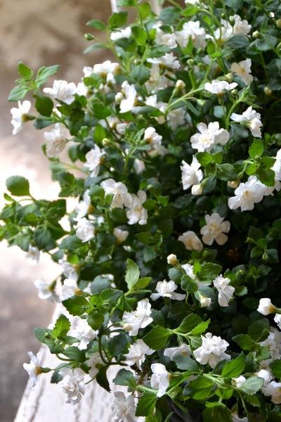 白いリース。。。_a0229658_13679.jpg