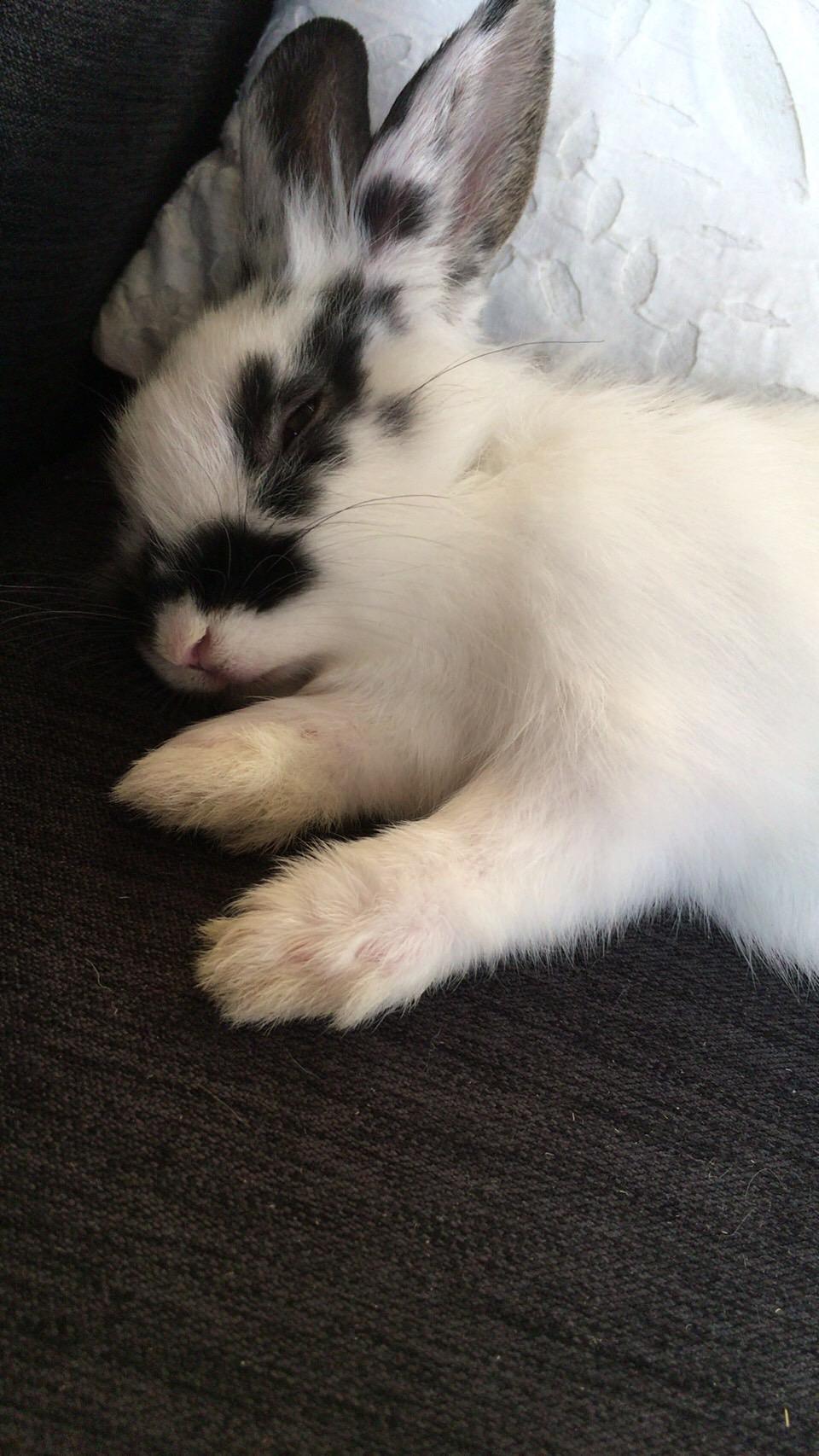 ウサギのぴょん吉_c0000759_13592634.jpg