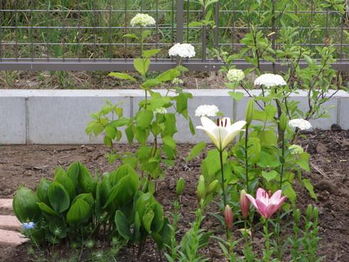 レンガ花壇横に新しいコーナーをつくりました_a0243064_17563045.jpg