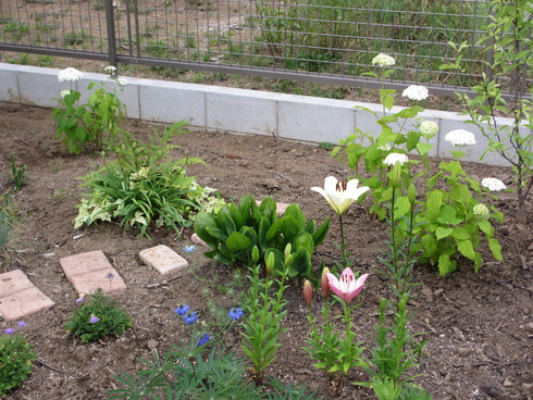レンガ花壇横に新しいコーナーをつくりました_a0243064_17564944.jpg