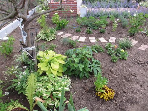 レンガ花壇横に新しいコーナーをつくりました_a0243064_1757879.jpg