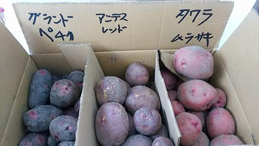 プチ便り(ジャガイモの収穫)_a0206870_1721060.jpg