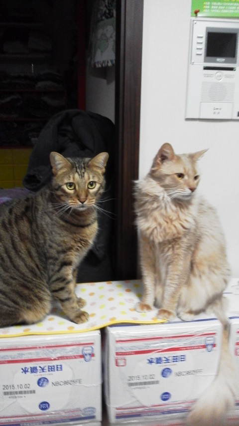 ネコ・空ちゃんと天ちゃん_d0339676_21215554.jpg