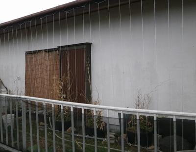 ゴーヤのグリーンカーテンの下準備_f0018078_17234823.jpg