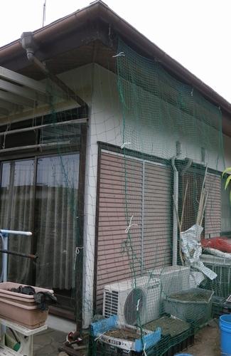 ゴーヤのグリーンカーテンの下準備_f0018078_1725545.jpg