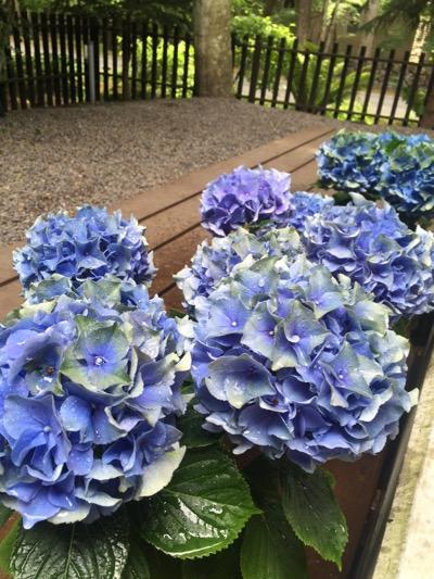 FLOWER FIELD_d0133485_15435472.jpg