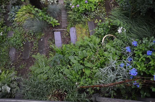 やっと雨止んだ、6月13日の庭。_c0124100_23264585.jpg