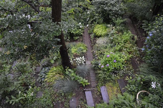 やっと雨止んだ、6月13日の庭。_c0124100_2326549.jpg