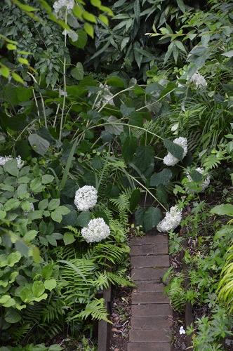 やっと雨止んだ、6月13日の庭。_c0124100_23271418.jpg