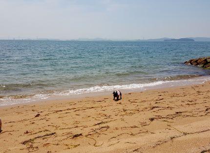 海に出かけます!_b0122805_15181546.jpg